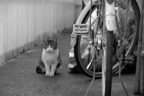 ★自転車と猫