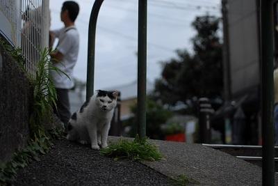 だんだん猫