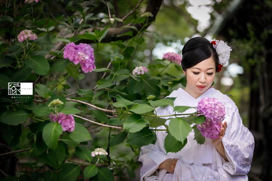 116 2_紫陽花 (7)
