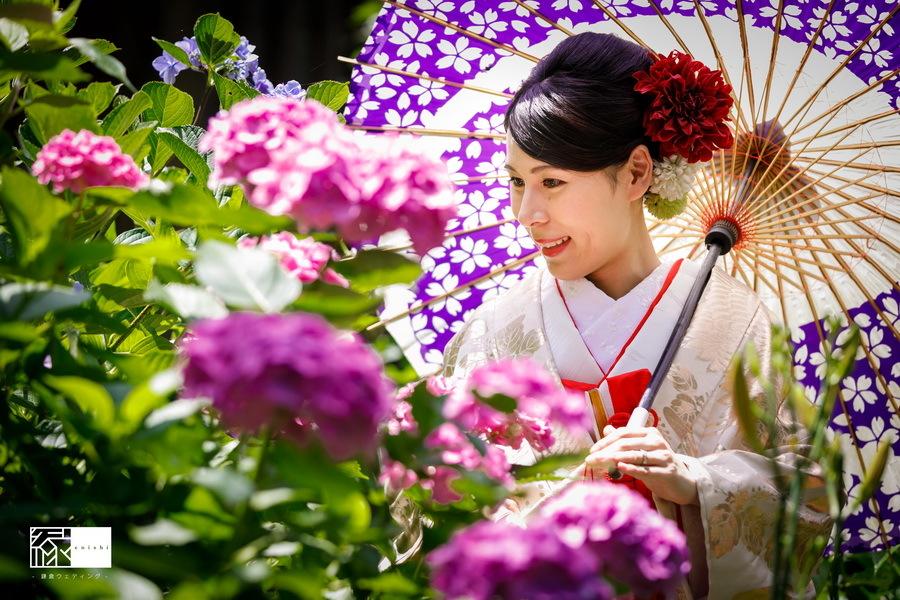 116 2_紫陽花 (8)