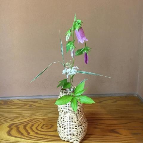 0 nohana 今月から茶道は炉から風炉に変わり、茶花の花入も籠に変わり、夏らしい演出になりました ホタルブクロ、京鹿の子、シマアシ、甘茶