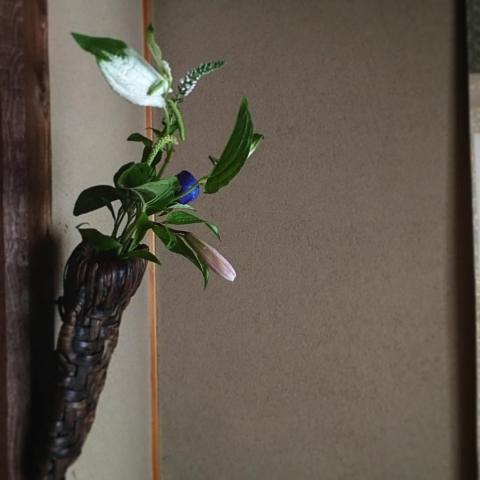 0 nohana 柱掛けの鉈籠に。 笹百合、桔梗、半夏生、虎の尾