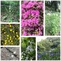 黒川あたりの花