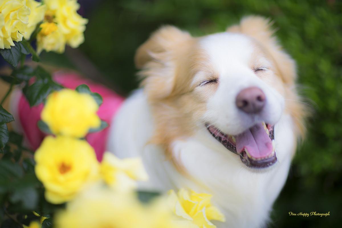 バラの甘い香りは笑顔をつくる