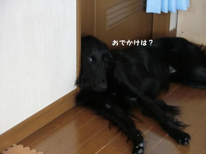 CIMG9367.jpg