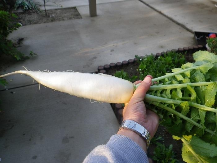 収穫2_18_04_12
