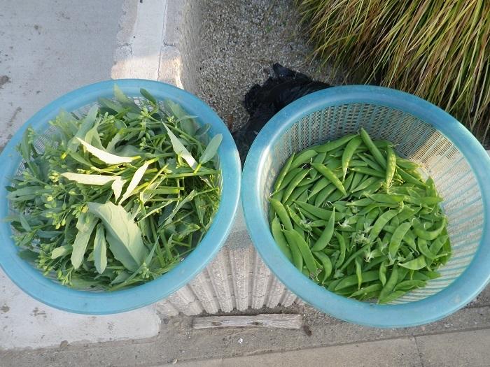 収穫18_04_23
