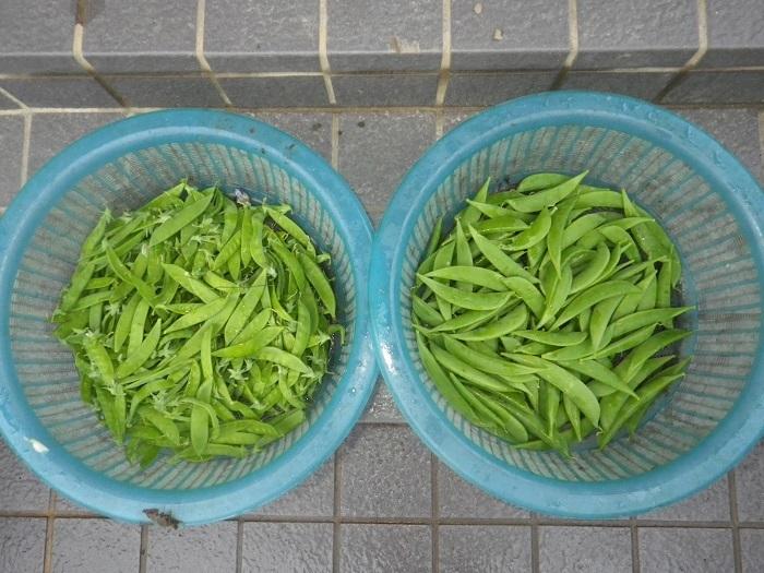 収穫1_18_05_09