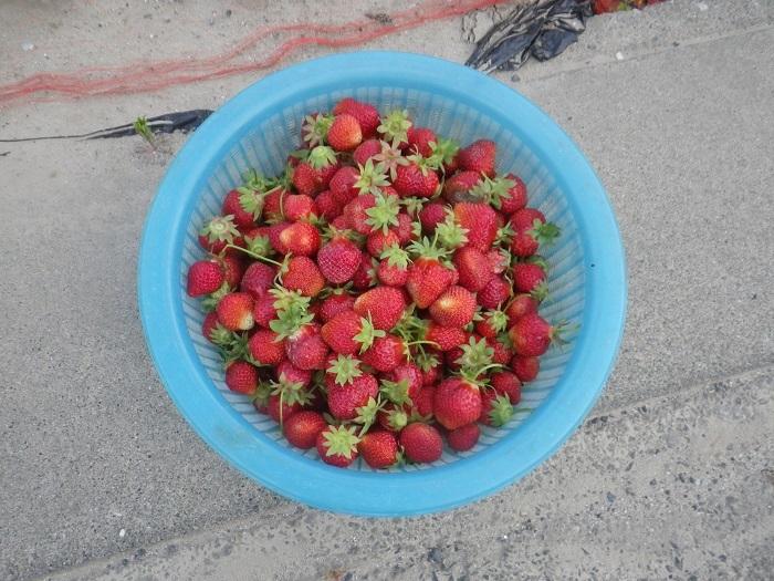収穫3_18_05_12