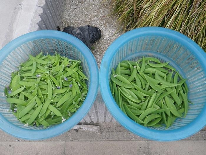 収穫1_18_05_13