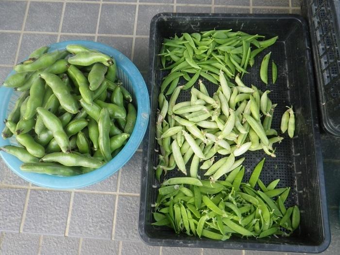 収穫3_18_05_20