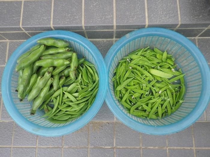 収穫1_18_05_23