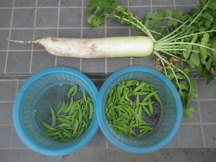 収穫18_05_30