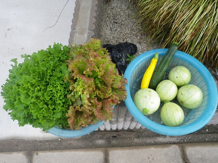 収穫1_18_05_31