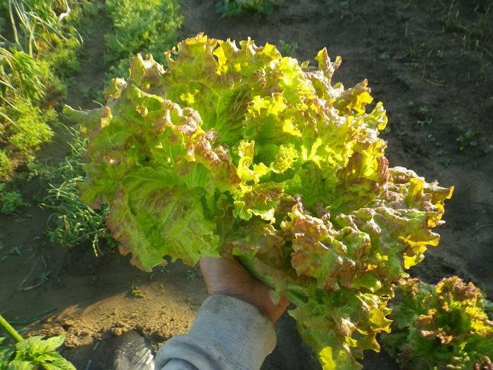 収穫2_18_06_01