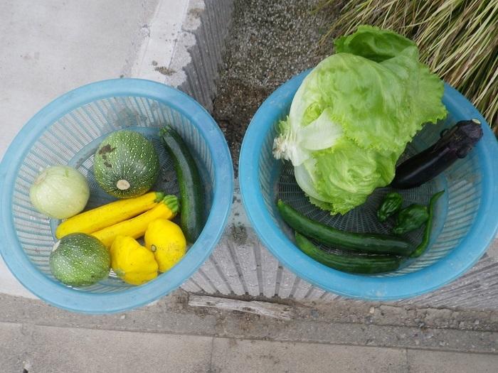 収穫18_06_10