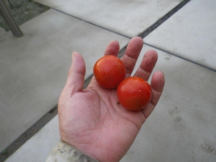 収穫2_18_06_30