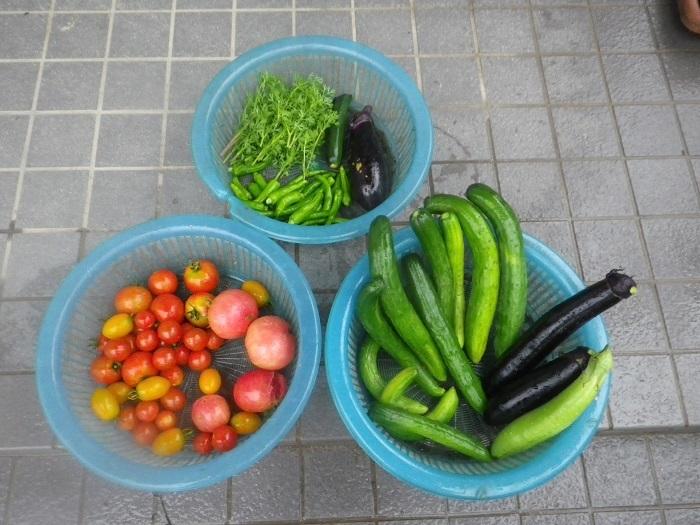 収穫18_07_05
