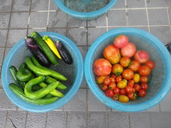収穫18_07_06