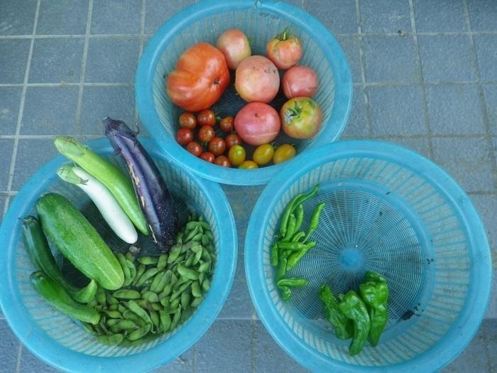 収穫1_18_07_09