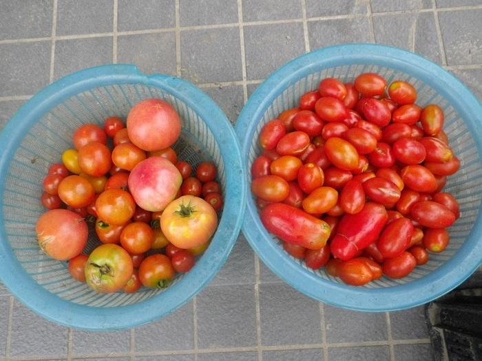 収穫2_18_07_12