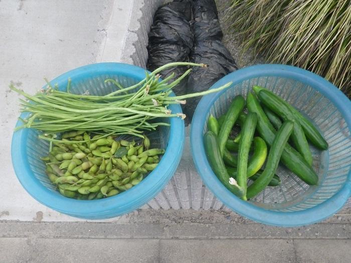 収穫18_07_19