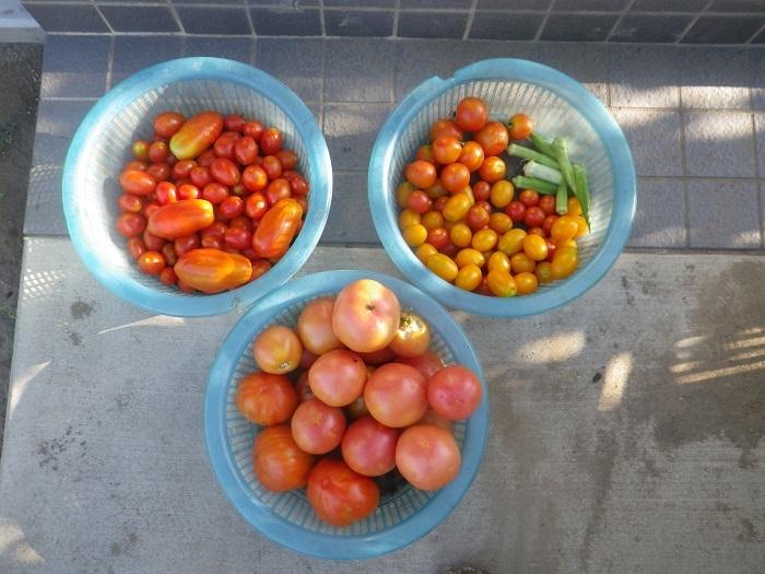 収穫2_18_07_22