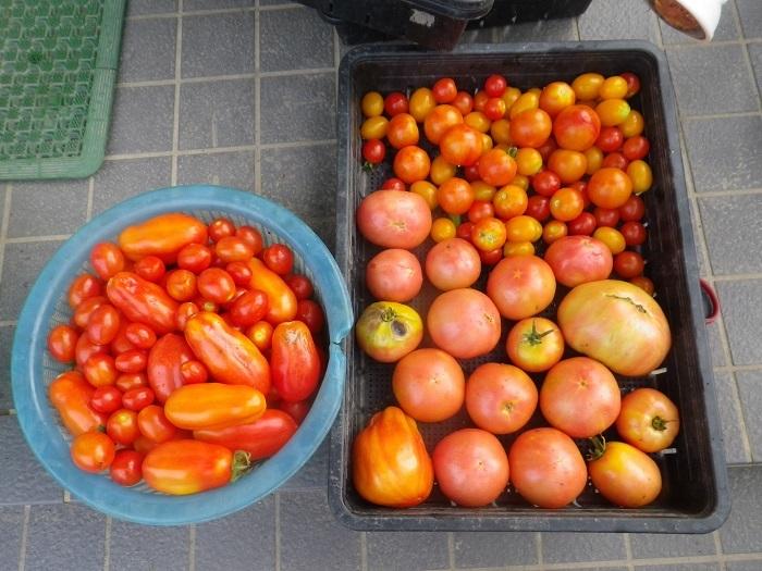 収穫2_18_07_26