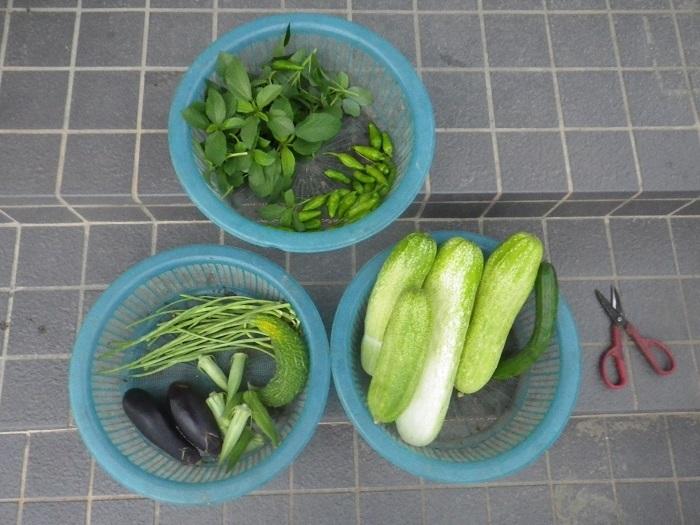 収穫18_07_27