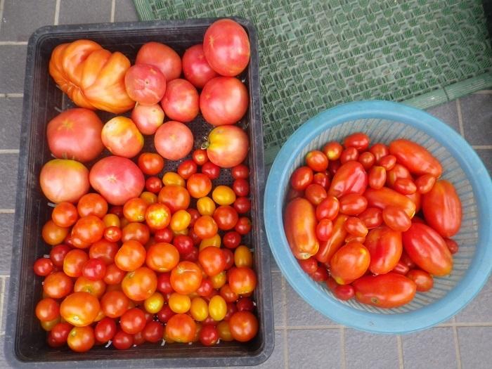 収穫1_18_07_29