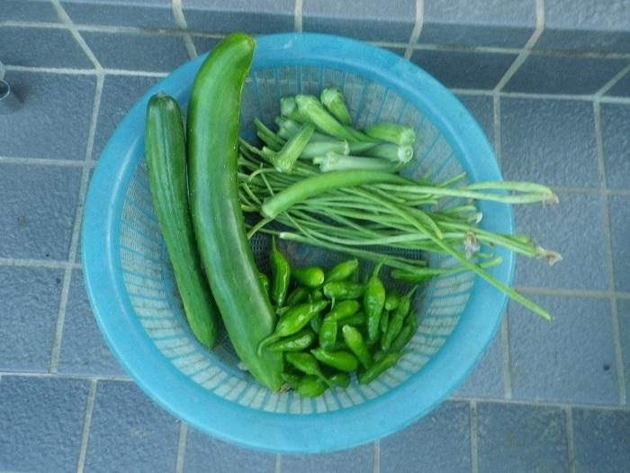 収穫18_07_30