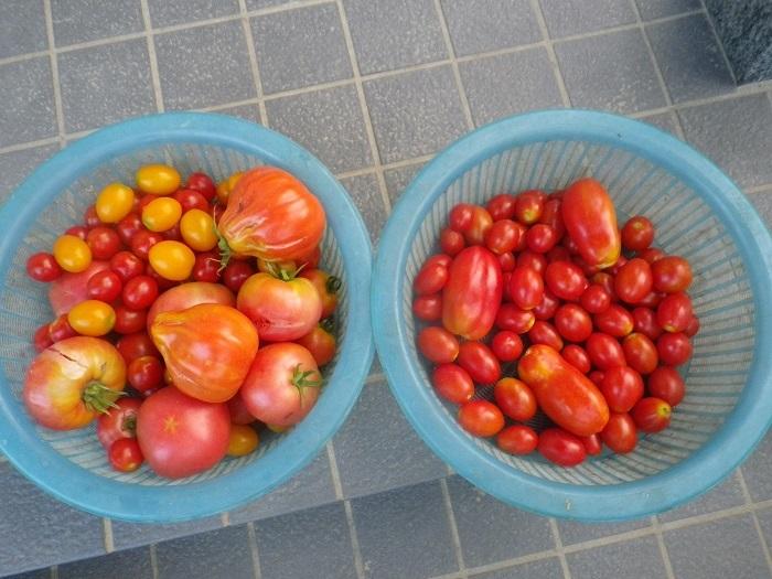 収穫2_18_07_31