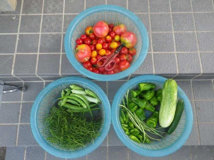 収穫18_08_02