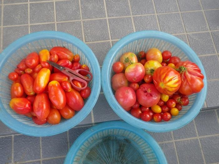 収穫2_18_08_04
