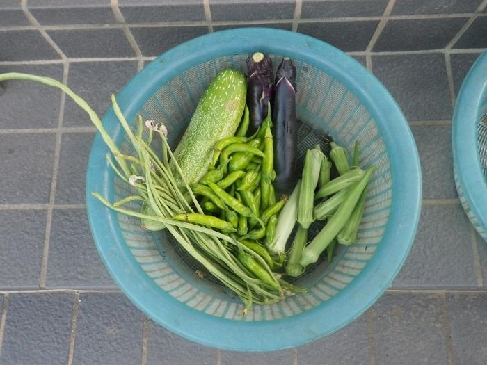 収穫18_08_08