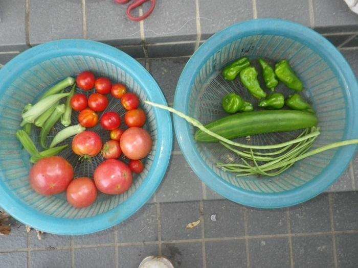 収穫18_08_09