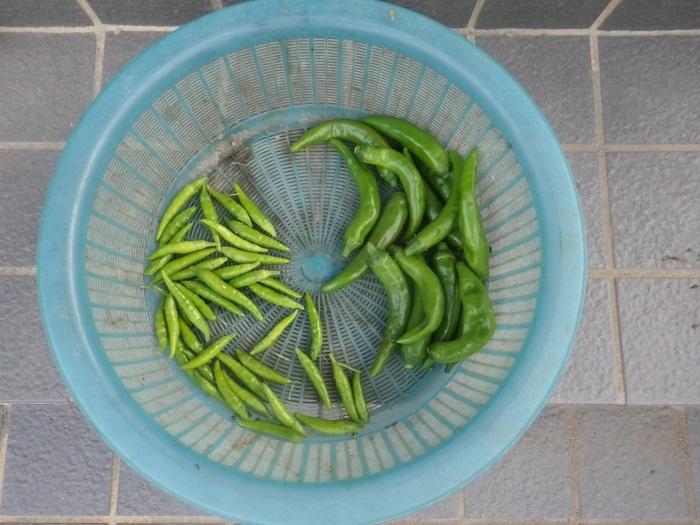 収穫2_18_08_12