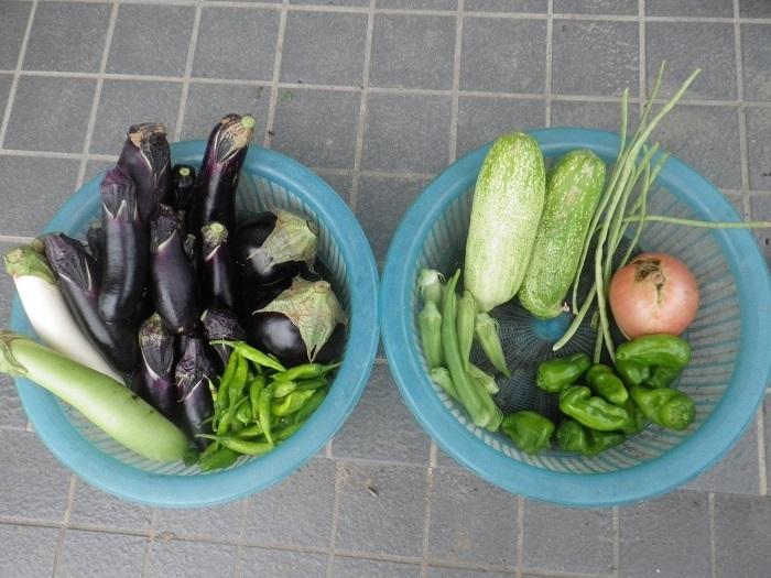 収穫1_8_08_14