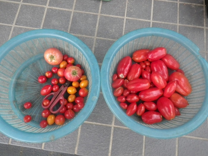 収穫2_18_08_15