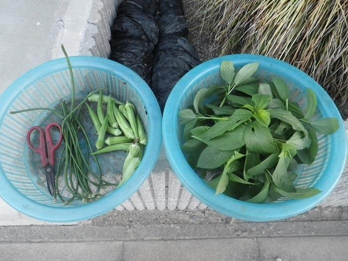 収穫18_08_17