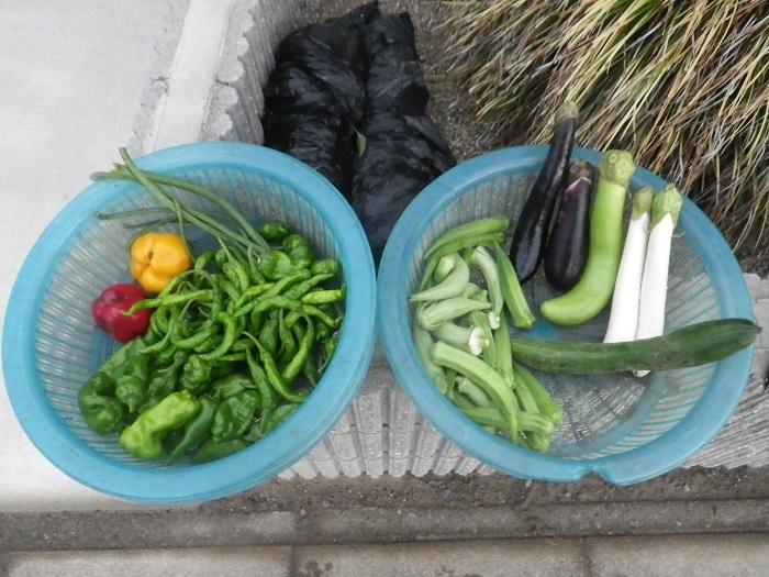 収穫1_18_08_25