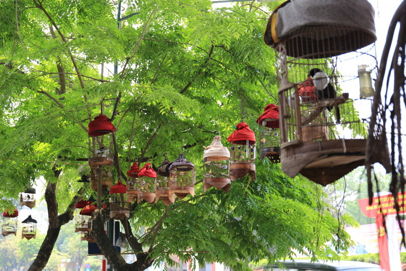 ハノイ 鳥