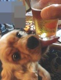 俺ビール ルル
