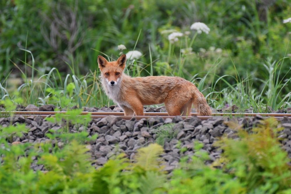 5恋問自然観察公園