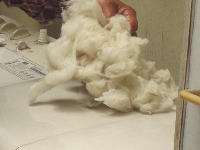 水洗後羊毛ー4