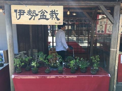 25伊勢盆栽