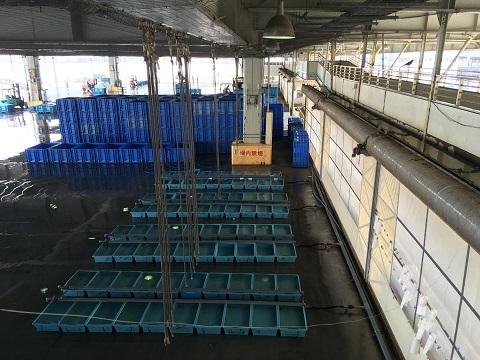 10水産市場