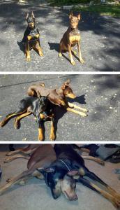 ずっと友達!仲がいい犬たちの画像が癒される!!の画像(19枚目)