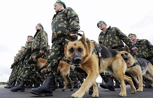 辛くても癒される!軍用犬でほのぼのしている写真の数々!!の画像(10枚目)