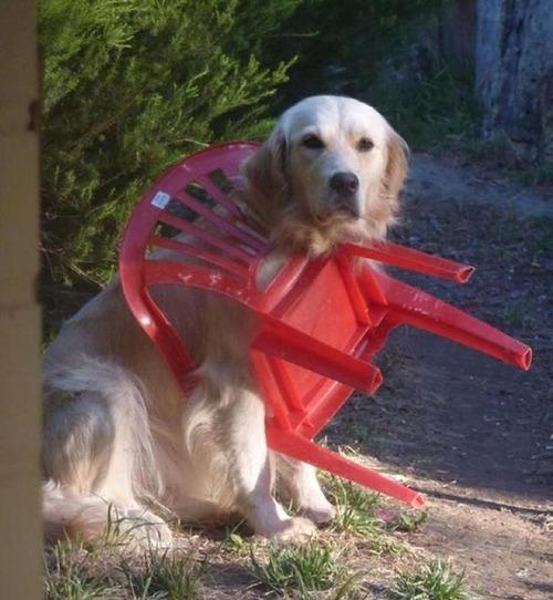 犬はバカ可愛い!!バカだけど憎めない可愛い犬の画像の数々!!の画像(12枚目)
